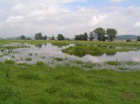 suedlicher Teich2
