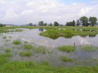 suedlicher Teich